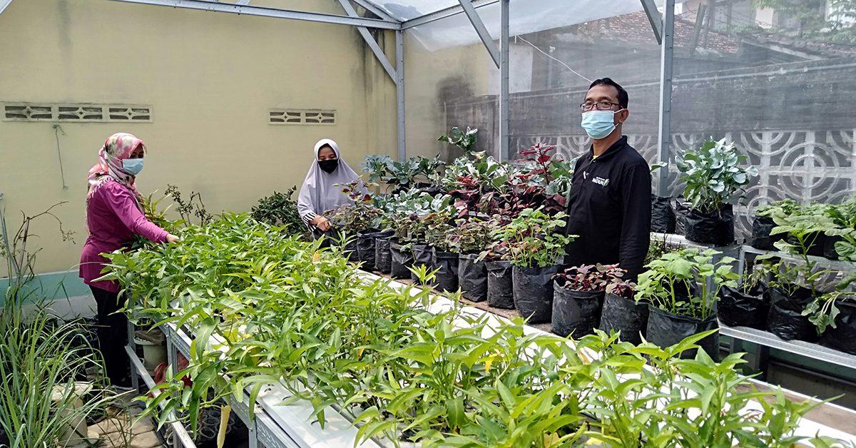 Optimis verifikasi Proklim, Kelompok Tani Taman Lestari Kota Madiun sukses ubah pekarangan jadi sumber pangan